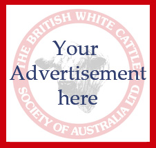 Create a Advertise Here box