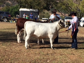 Wins at Tallangatta Show