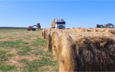 British White Breeders Support Fire Affected Farmers With Hay Donation